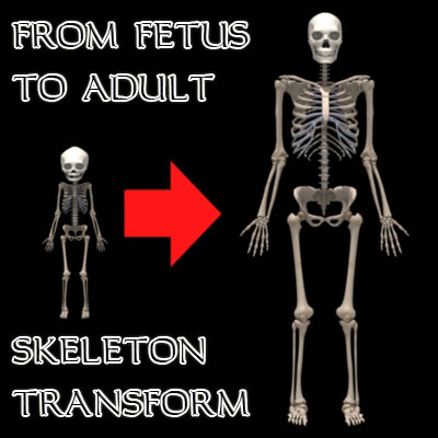 human and bones adult fetal